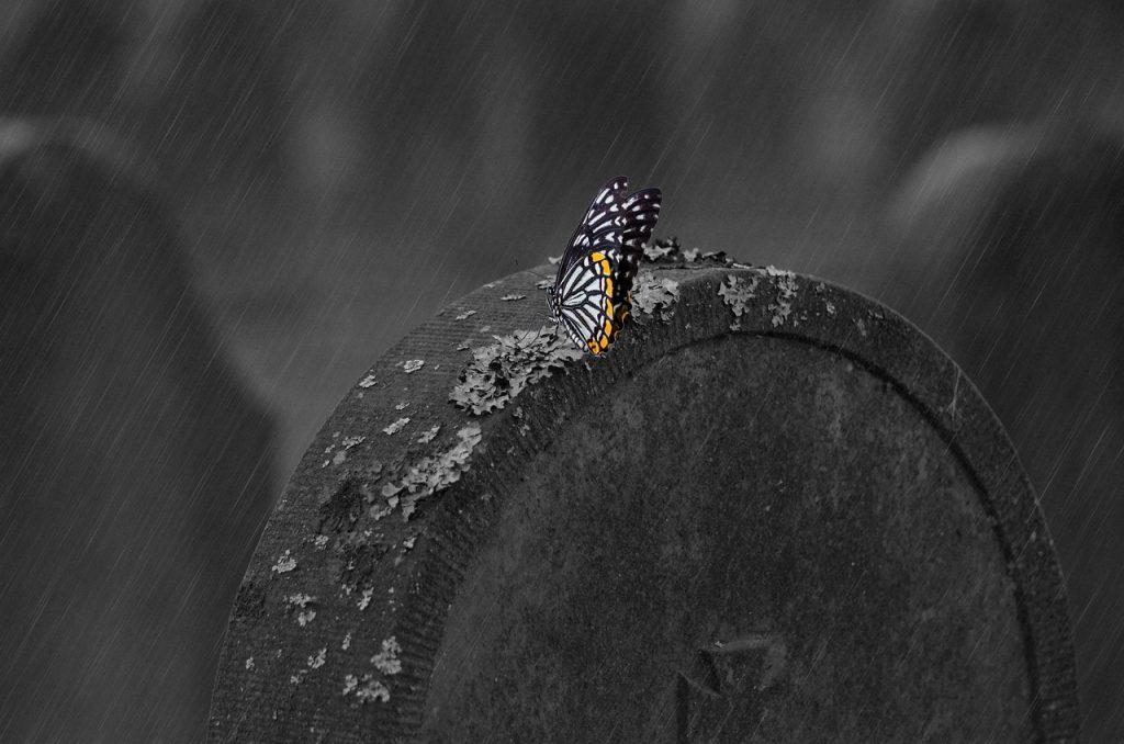 Ein Schmetterling auf einem Grabstein