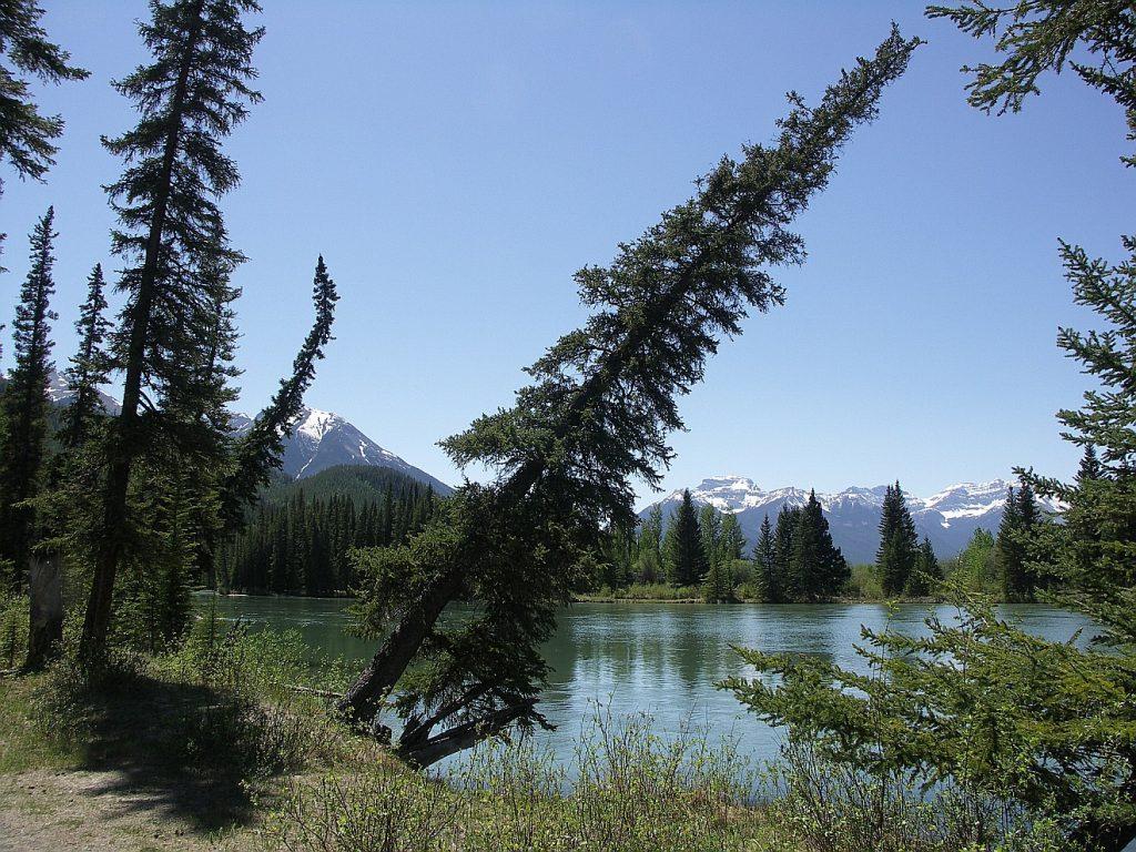 """Wer einmal auf die """"schiefe Bahn"""" geraten ist, hat der noch eine Chance? Das Bild eines Nadelbaums an einem kanadischen See, der sehr schief steht..."""