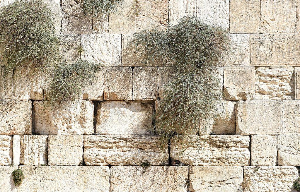 Gemeinsame Verantwortung von Christen und Juden: Ein Bild von der Klagemauer, aus deren Ritzen Grün hervorsprießt