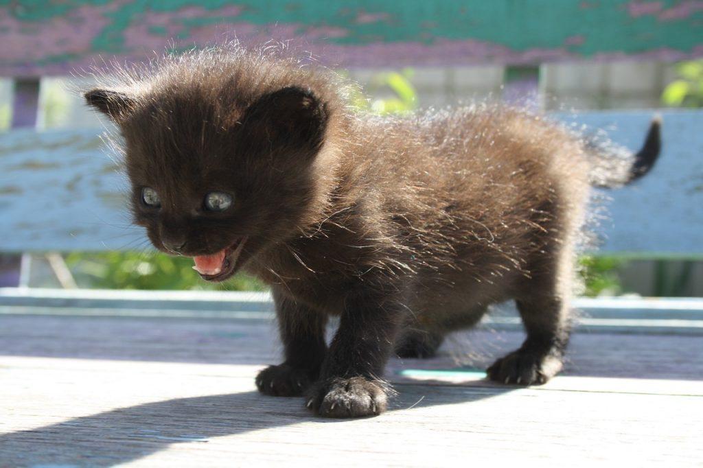 Ein schwarzes Kätzchen hat große Angst