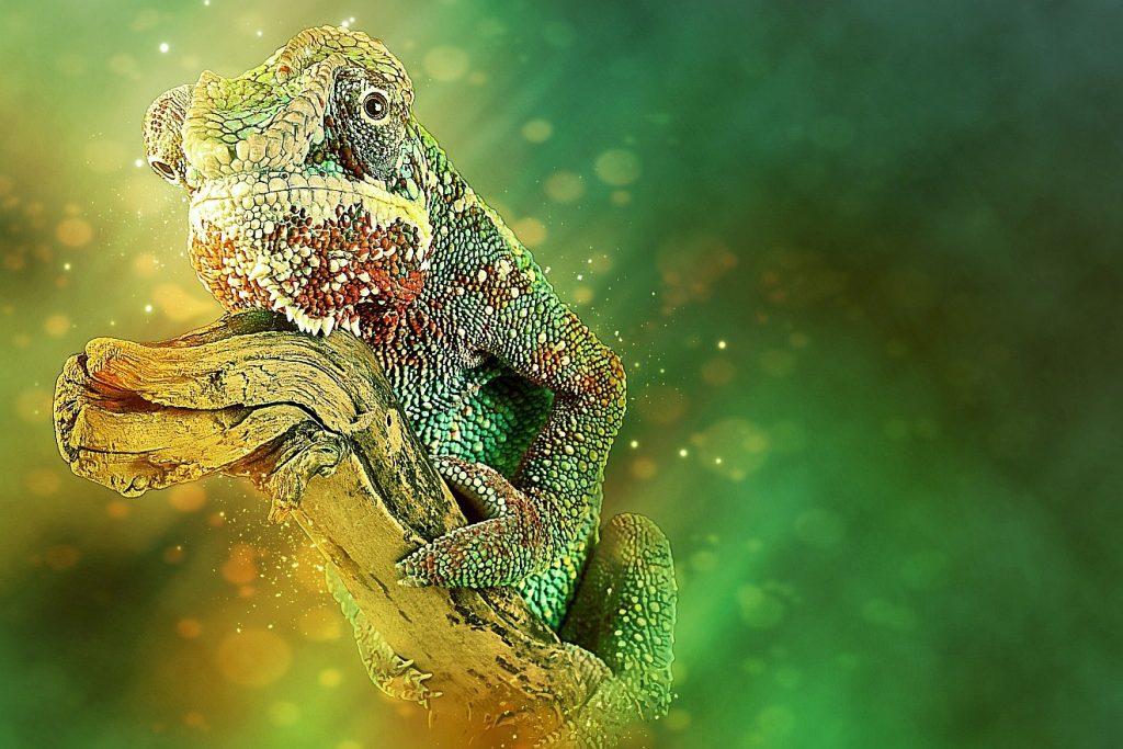 Allen alles werden: Will Paulus sich wie ein Chamäleon anpassen? Das Bild zeigt ein gelb-grünes Chamäleon vor gelb-grünem Hintergrund