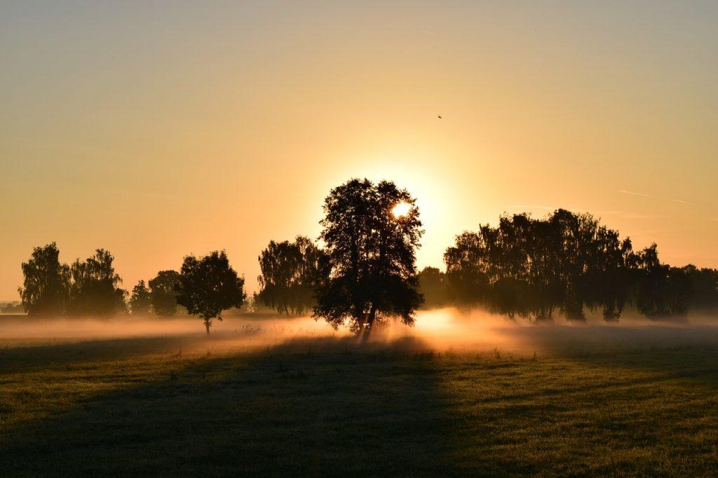Morgenlandschaft mit Morgennebel, Sonne geht hinter einem Baum auf,