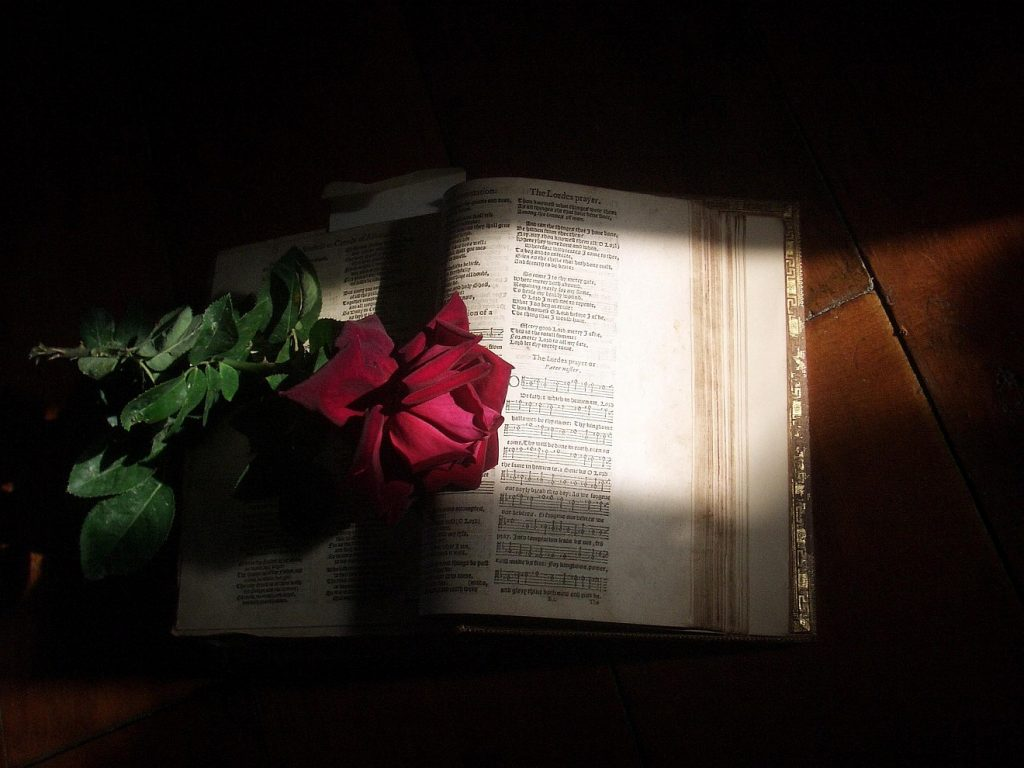 Von Gottes Liebe umgeben: Eine Bibel, auf der eine rote Rose liegt