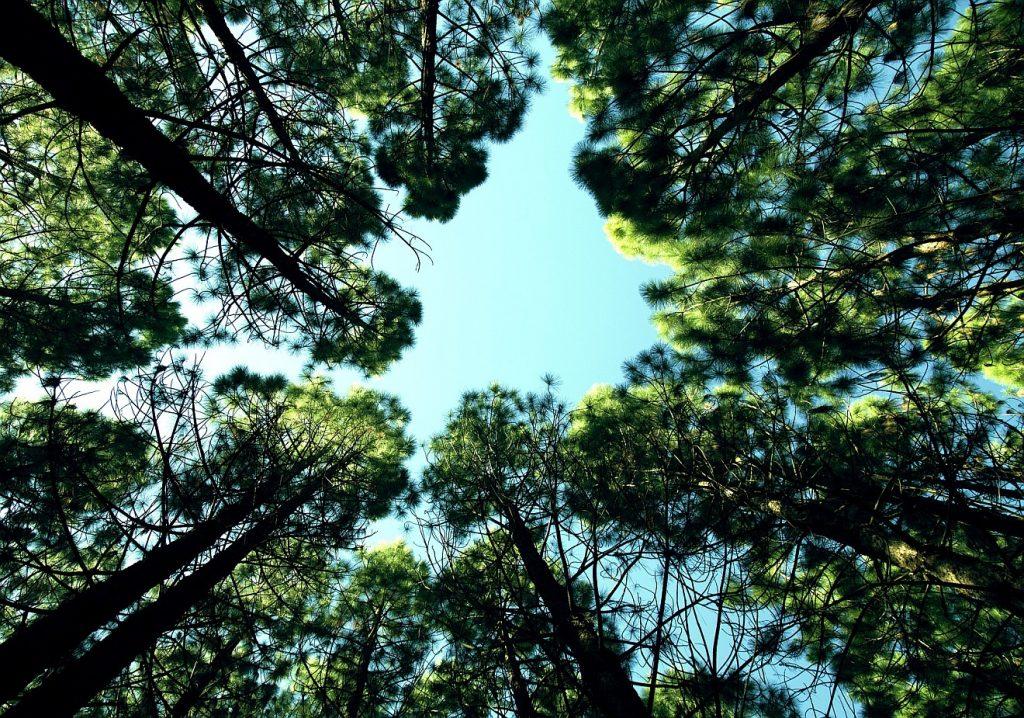 """""""Wohl dir, du Kind der Treue"""": Blick in den Himmel durch Baumkronen hindurch"""