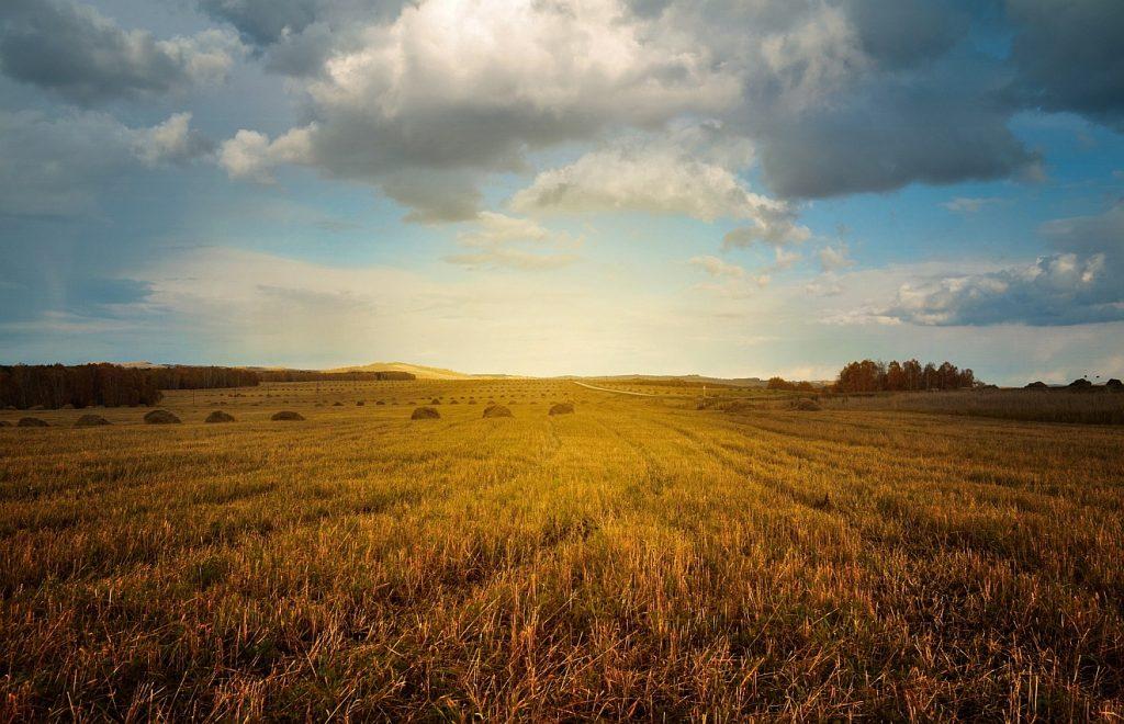 Morgenblick zum Himmel: Ein Erntefeld, darüber ein mäßig bewölkter Himmel nach dem Sonnenaufgang