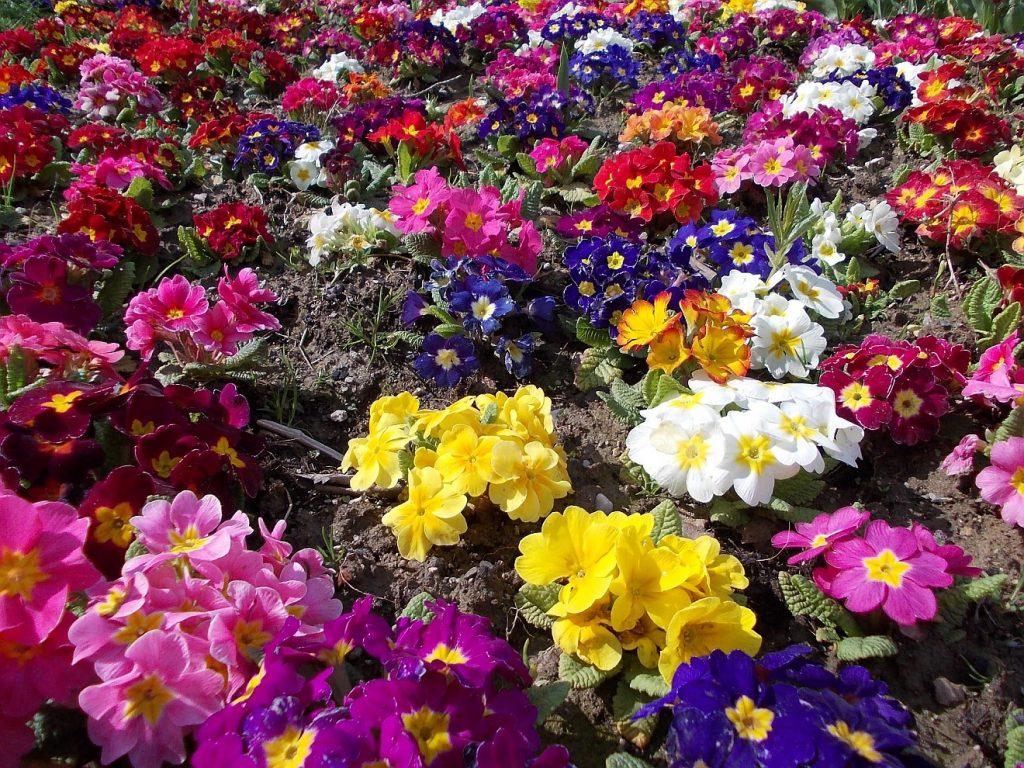 Gelebte Zuversicht: Ein Blumenbeet mit vielen bunten Blumen