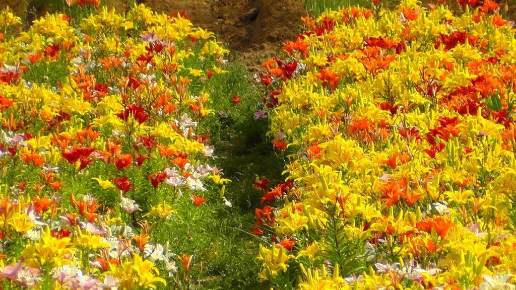 Von Gott gesättigt mit langem Leben: Eine farbenfrohe Blumenwiese als Symbol für erfülltes Leben