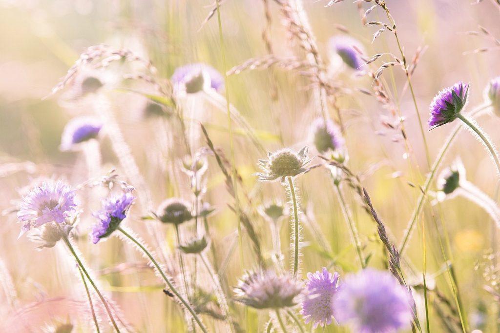 """Gott weiß, """"was für ein Gebilde wir sind"""": Feld- und Wiesenblumen im Sonnenlicht"""