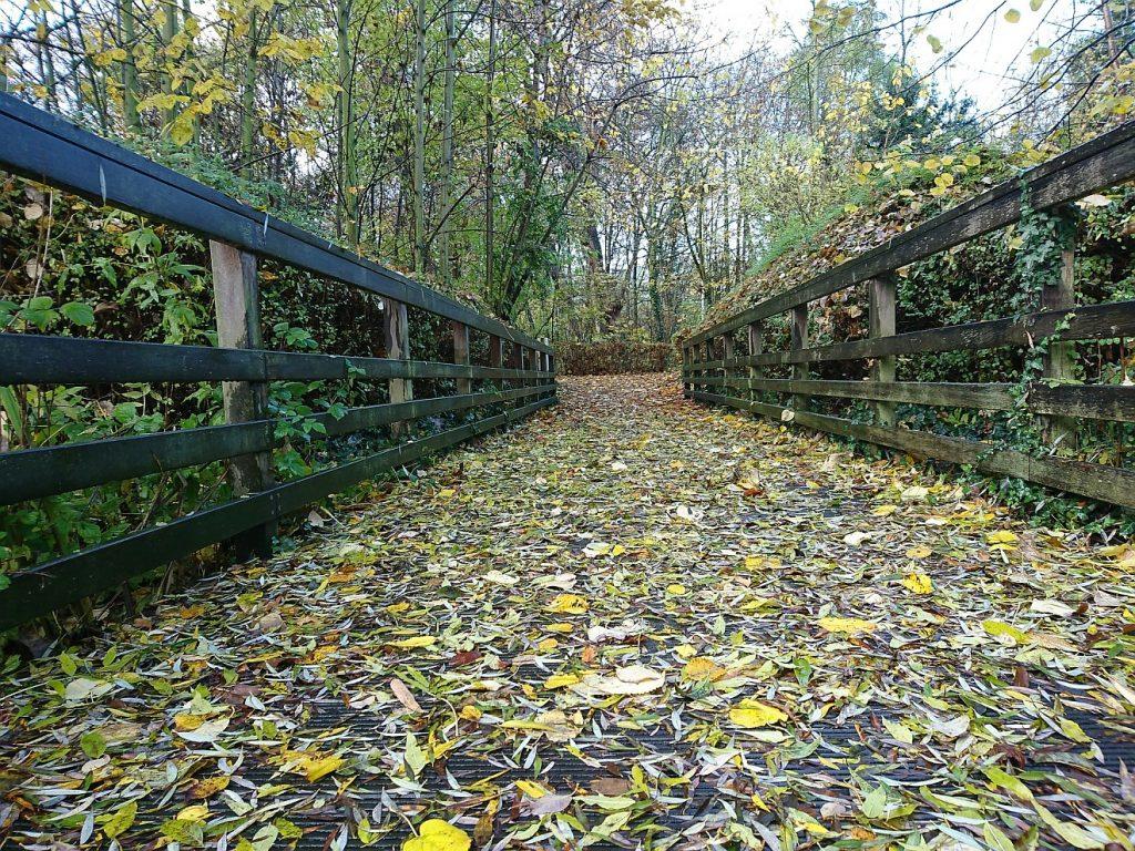 Tod eines geradlinigen Menschen: Ein Weg voller Laub führt geradeaus zwischen zwei festen Holzzäunen hindurch