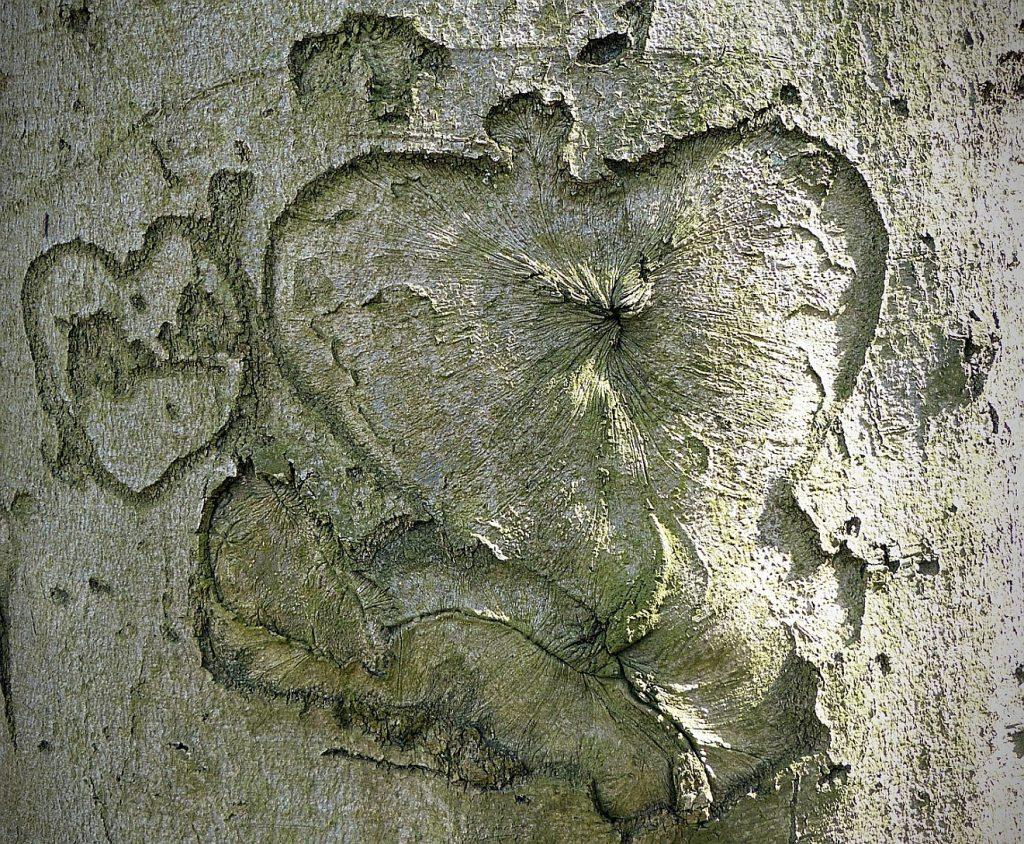 Ein Leben in Treue bis zum Tod: Ein vor vielen Jahren in einen Baum eingekerbtes Herz