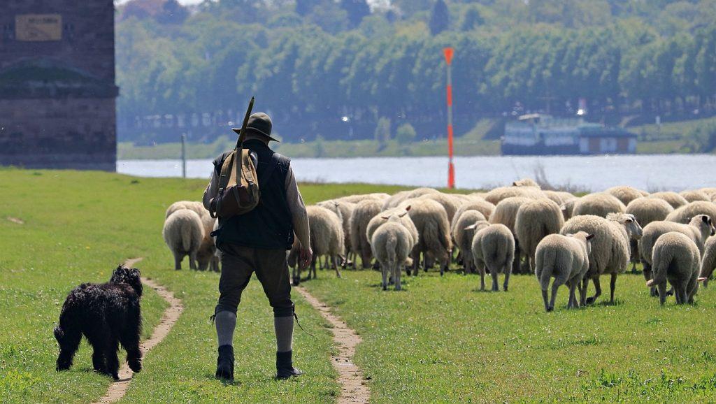 Ein Hirte mit einer Herde von Schafen und einem Hirtenhund