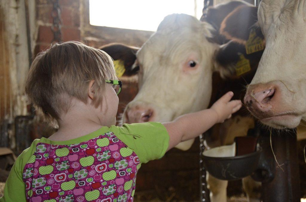 Ein glückliches Leben mit Trisomie 21: Ein Mädchen mit Down-Syndrom streckt in einem Stall ihre Hand zwei Kühen entgegen