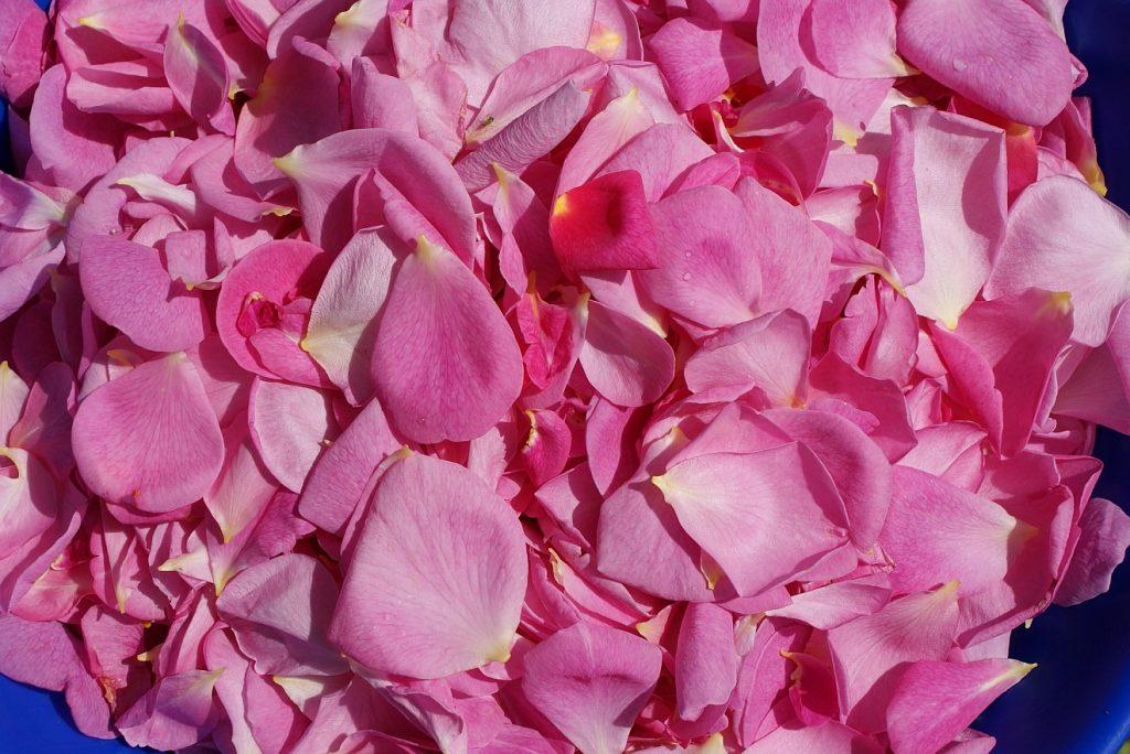 """""""Streut mir Rosenblätter aufs Grab!"""" Rosenblätter in einem Gefäß, um sie auf ein Grab zu streuen"""