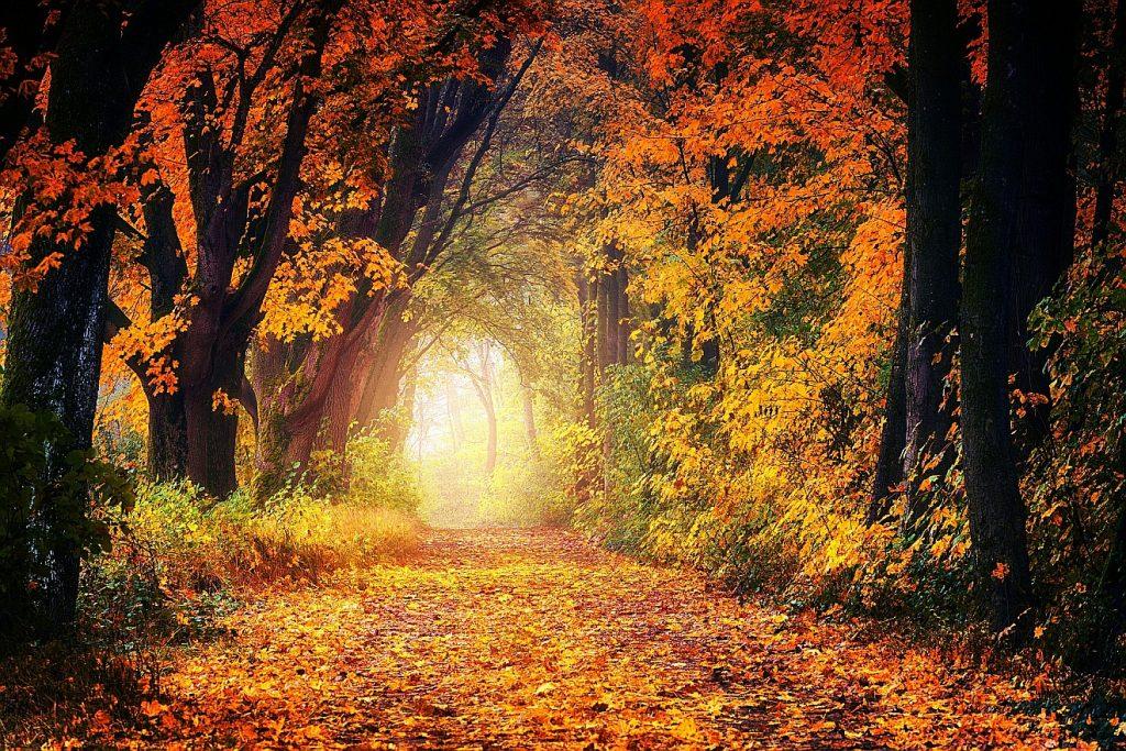 Am Ende eines Waldweges in einem herbstlichen Laubwald leuchtet helles Licht