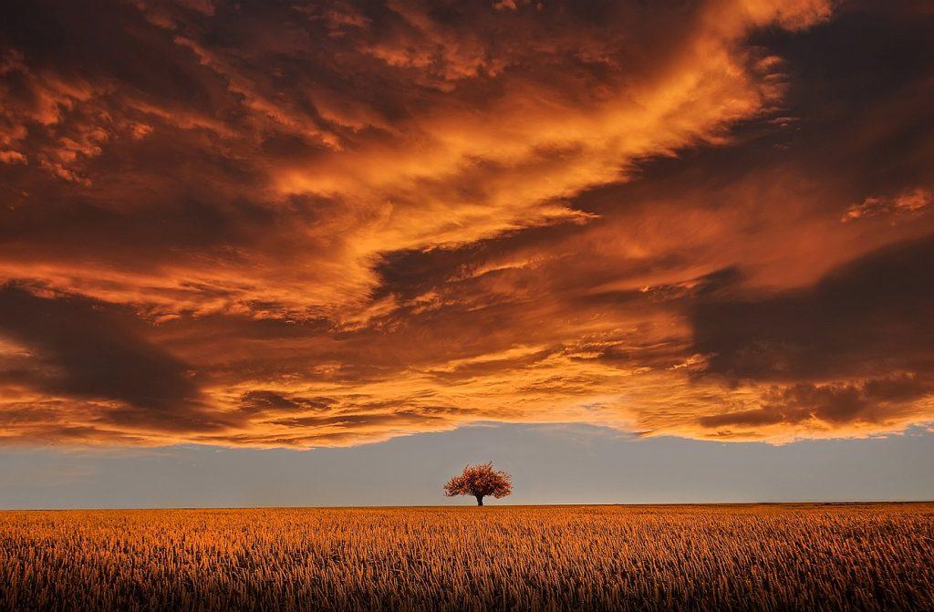 Marta und Maria in der richtigen Mischung: Beeindruckende, schwere Wolken beherrschen die beiden oberen Drittel des Bildes in dunkel bis rötlichen Farben; darunter ein einzelner Baum in der Ferne am Ende eines Kornfeldes vor einem weiten, offenen Horizont