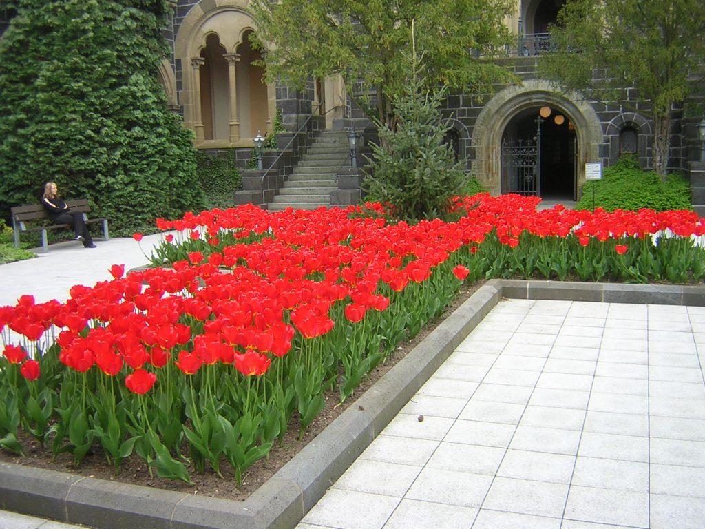 Bepflanzung mit roten Tulpen im kreuzförmigen Beet auf dem Vorplatz der Friedhofskapelle auf dem Rodtberg in Gießen