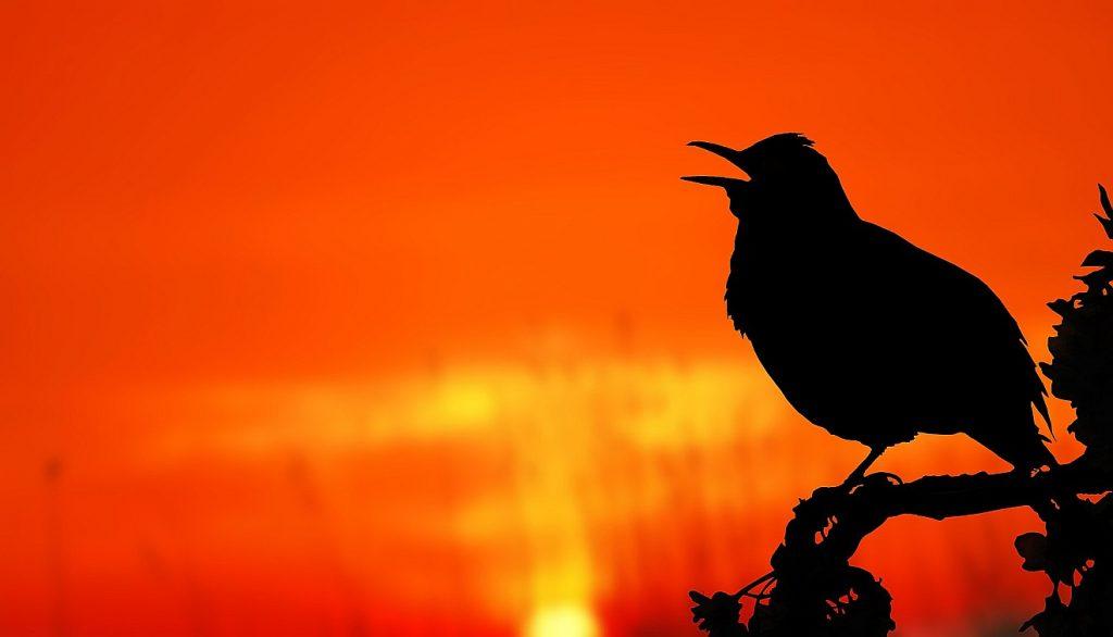 Ein Vogel singt in der Morgenröte