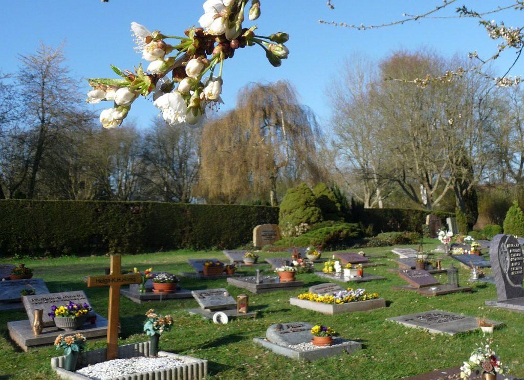 Kirschzweig über Gräbern auf dem Neuen Friedhof in Gießen