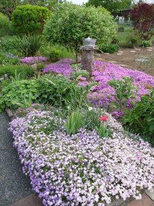 Violette Blumenbeete in einem Garten der Gartenfreunde