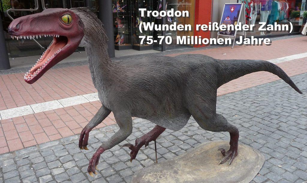 """Das Troodon ist ein kleiner, aber gefährlicher Dinosaurier, dessen Name """"Wunden reißender Zahn"""" bedeutet und der vor 75-70 Millionen Jahren gelebt hat."""