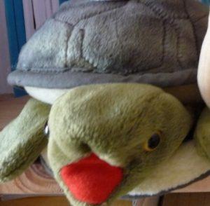 Die Schildkröte Zappi
