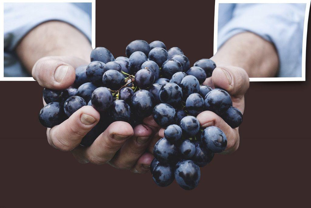 Eine Handvoll Weintrauben