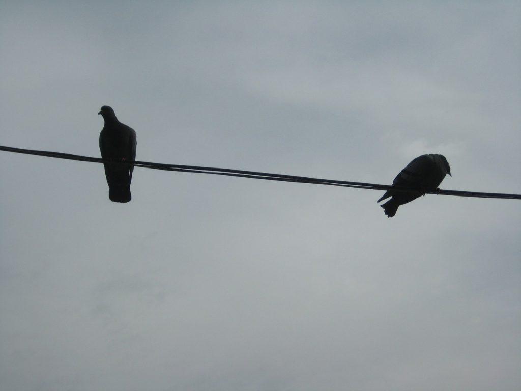 Taube und Rabe auf einem Draht