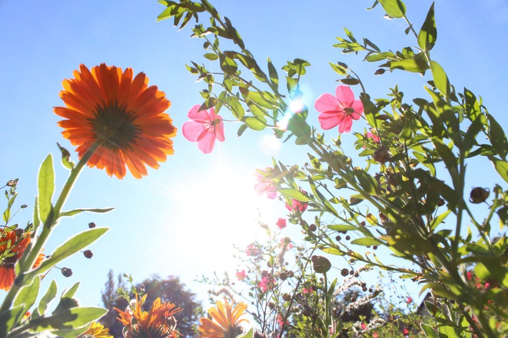 Blumen auf einer Wiese im Gegenlicht