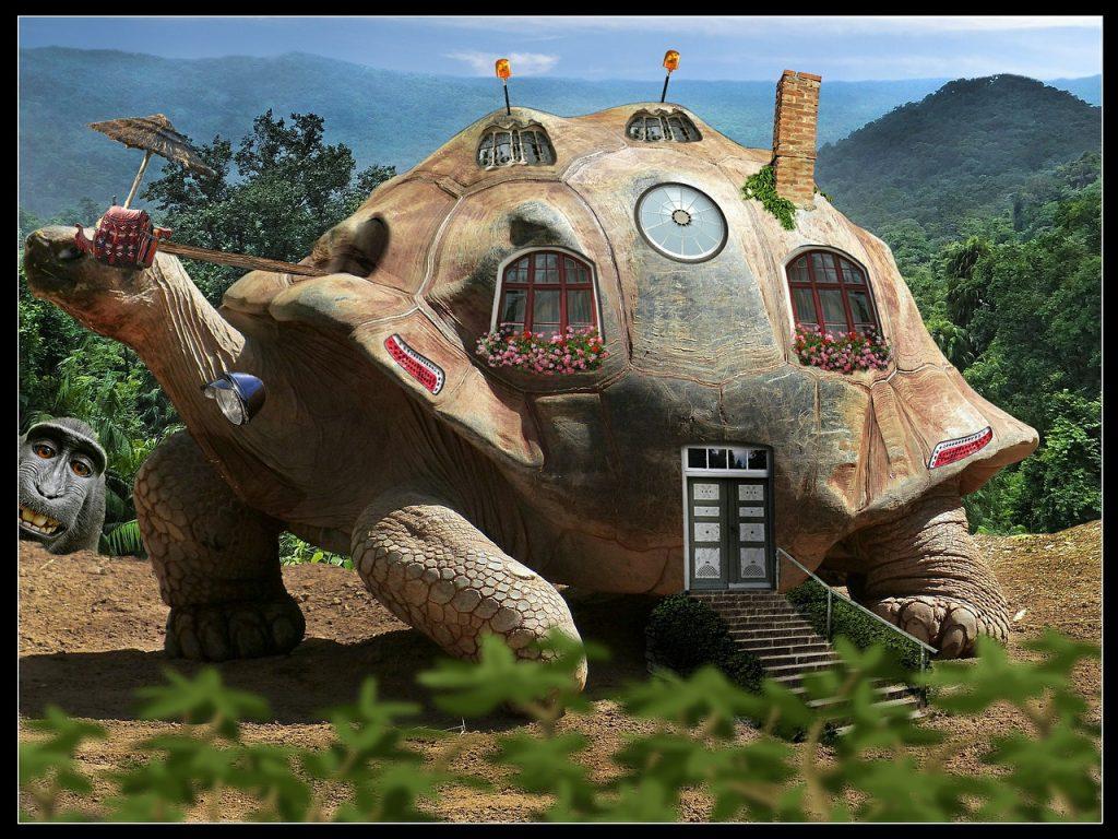 Eine Schildkröte, als Haus mit Fenstern, Tür, Schornstein etc. ausgestaltet