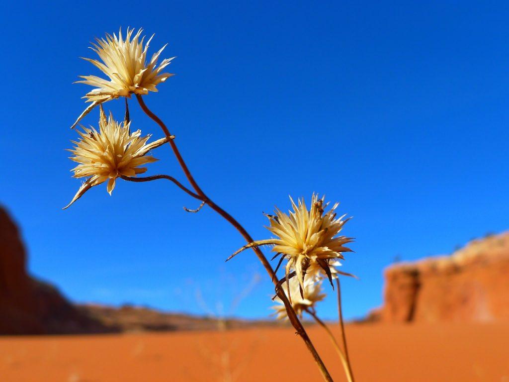 Ein paar Blüten vor dem Hintergrund einer Wüstenlandschaft