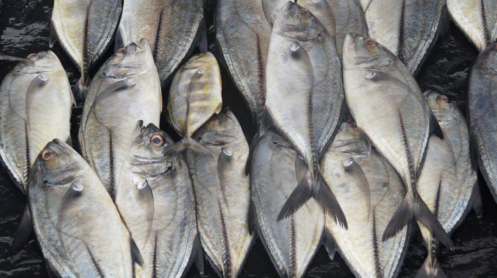 Großer Fischfang
