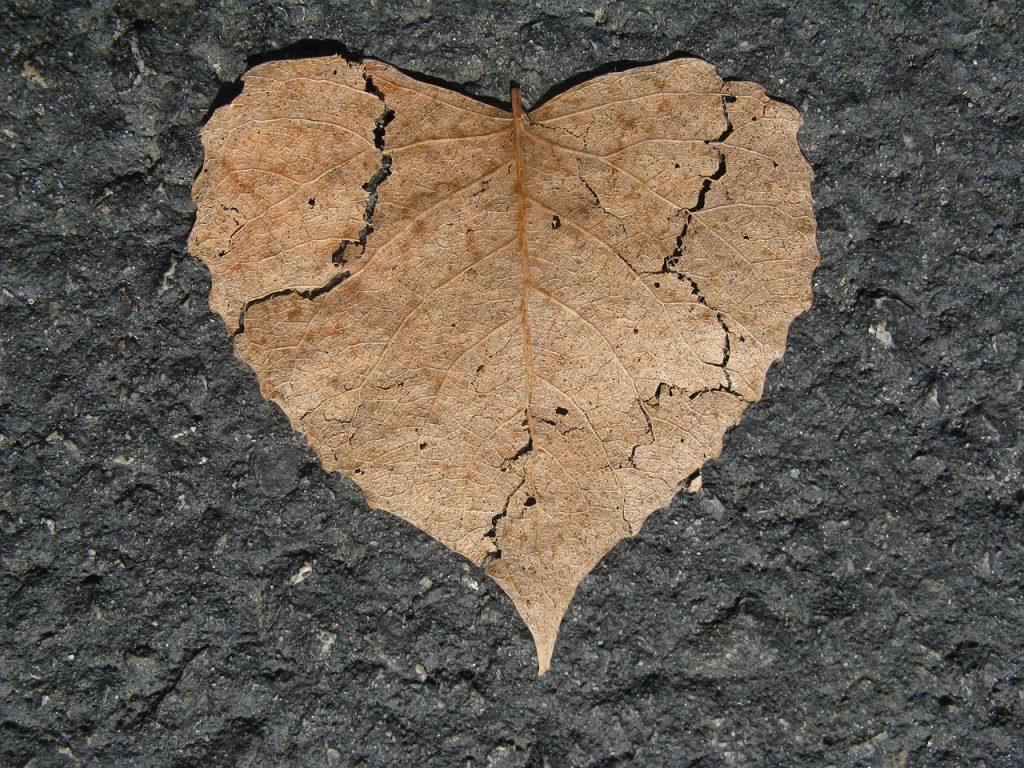 Ein braunes Herbstblatt, geformt wie ein Herz, mit einigen Rissen