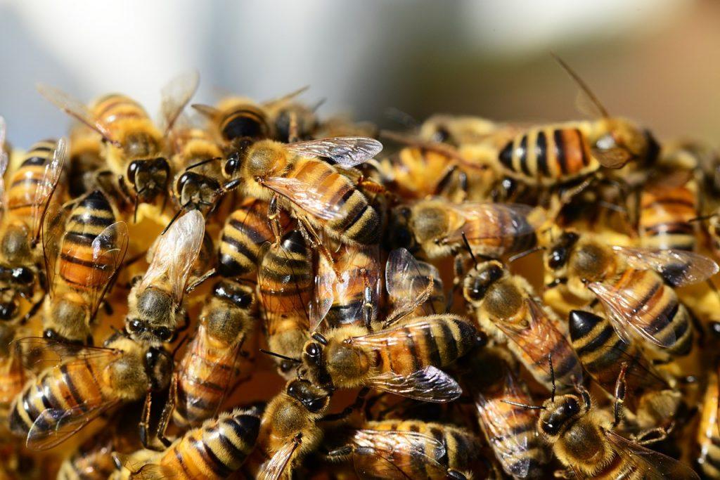 Viele Honigbienen beieinander