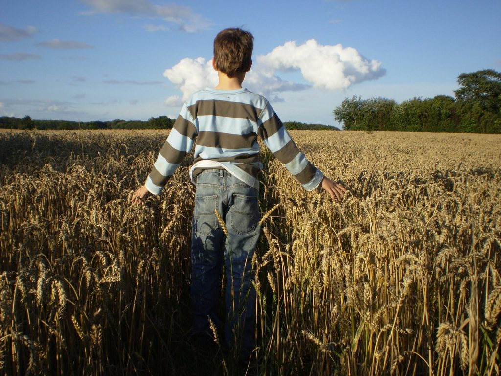 Ein Junge im Kornfeld unter blauem Himmel mit weißen Wolken