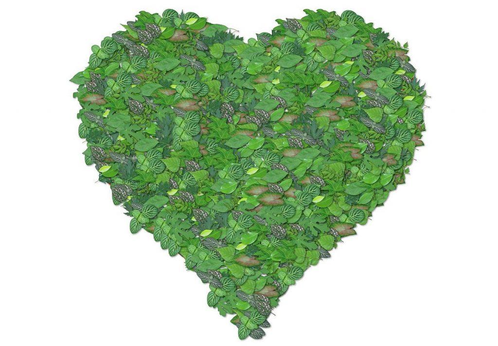 Ein mit Blättern begrüntes Herz