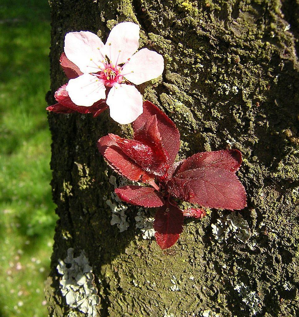 Eine Blüte und einige Blätter treiben aus einem Baumstamm heraus
