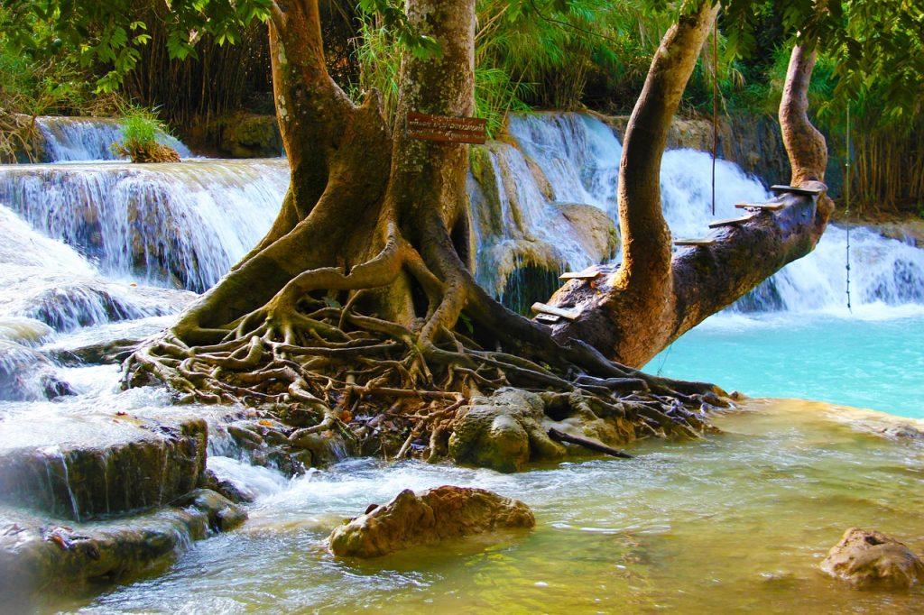 Ein zum Verweilen einladender Baum an Wasserbächen bzw. Wasserfällen