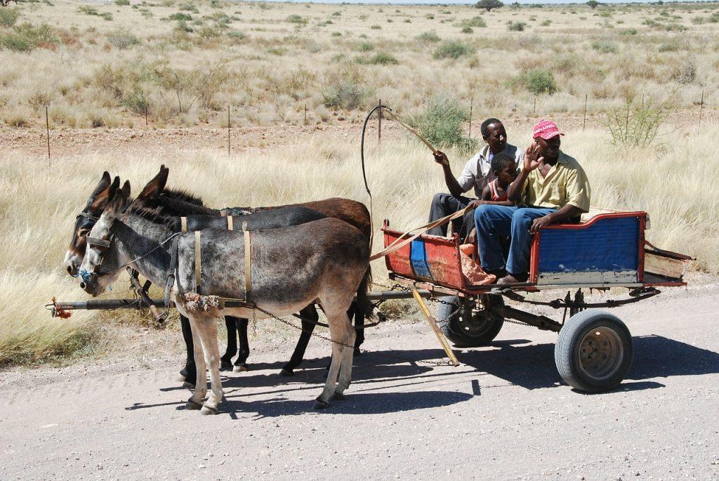 Ein von drei Eseln gezogener Wagen mit zwei afrikanischen Männern