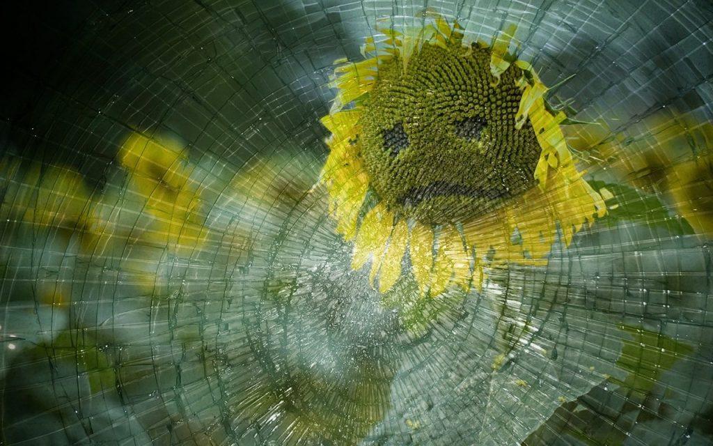 Sonnenblume mit traurigem Gesicht hinter Spinnennetz mit Tropfen