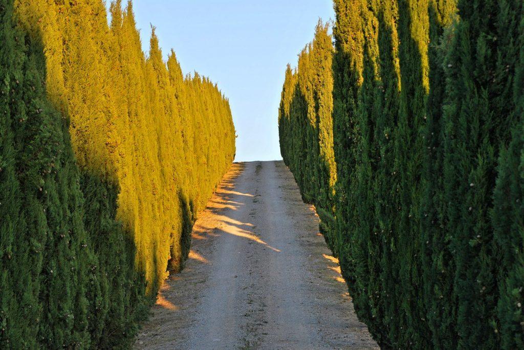 Zypessen an einer Straße der Toscana
