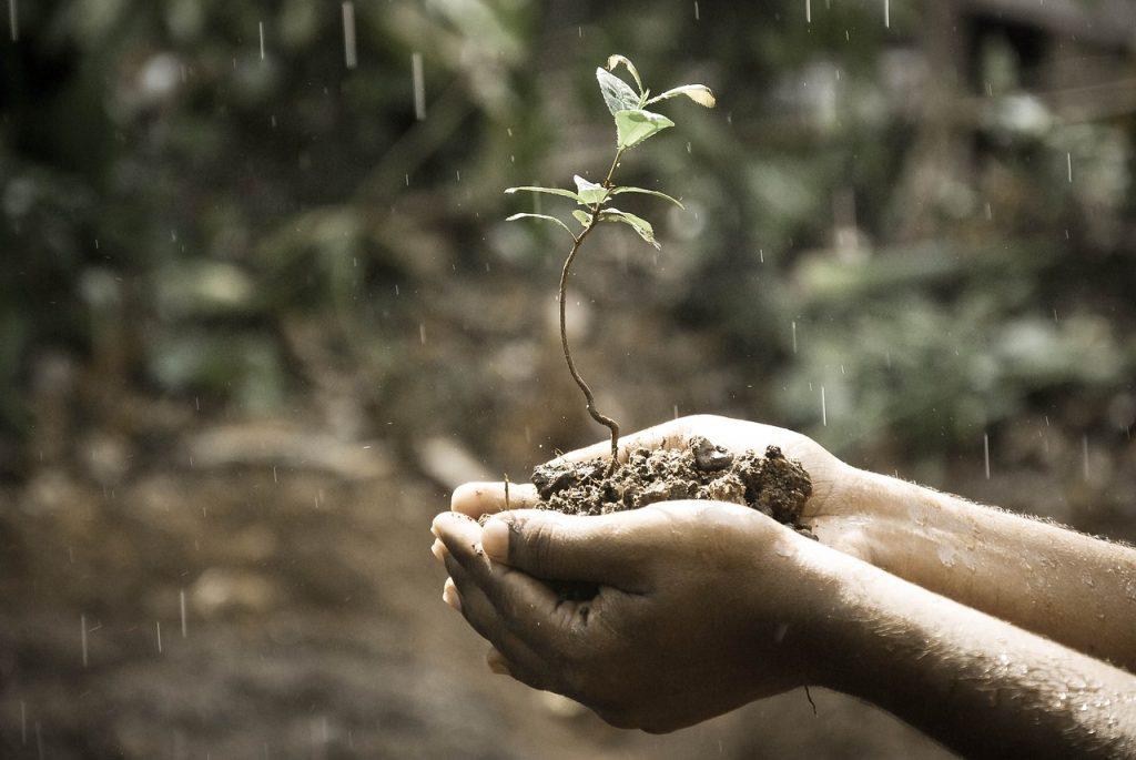 Regen für eine Pflanze, die in zwei Händen getragen wird - man muss geduldig auf ihr Wachsen warten