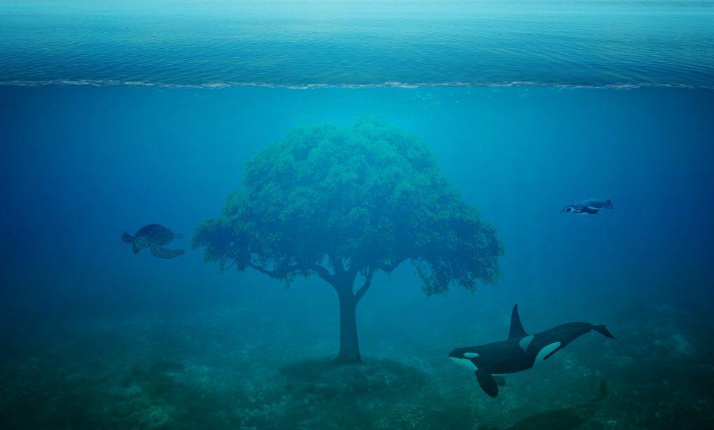 Ein Baum mit voller grüner Krone steht im Meer, unterhalb des Meeresspiegels, Fische und Delphine schwimmen um ihn herum