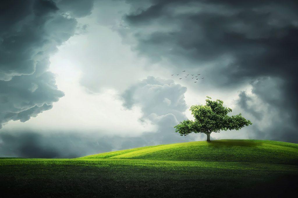 Eine Landschaft mit grünen Wiesen und einem Baum unter dramatisch bewölktem Himmel