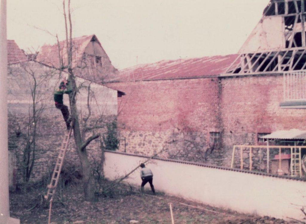 Zwei wohnsitzlose Männer fällen auf dem Pfarrgrundstück einen angeschlagenen Birnbaum