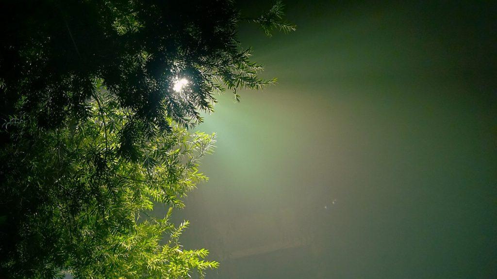 Nichts war vergeblich: Durch einen immergrünen Baum scheint das Licht der Sonne