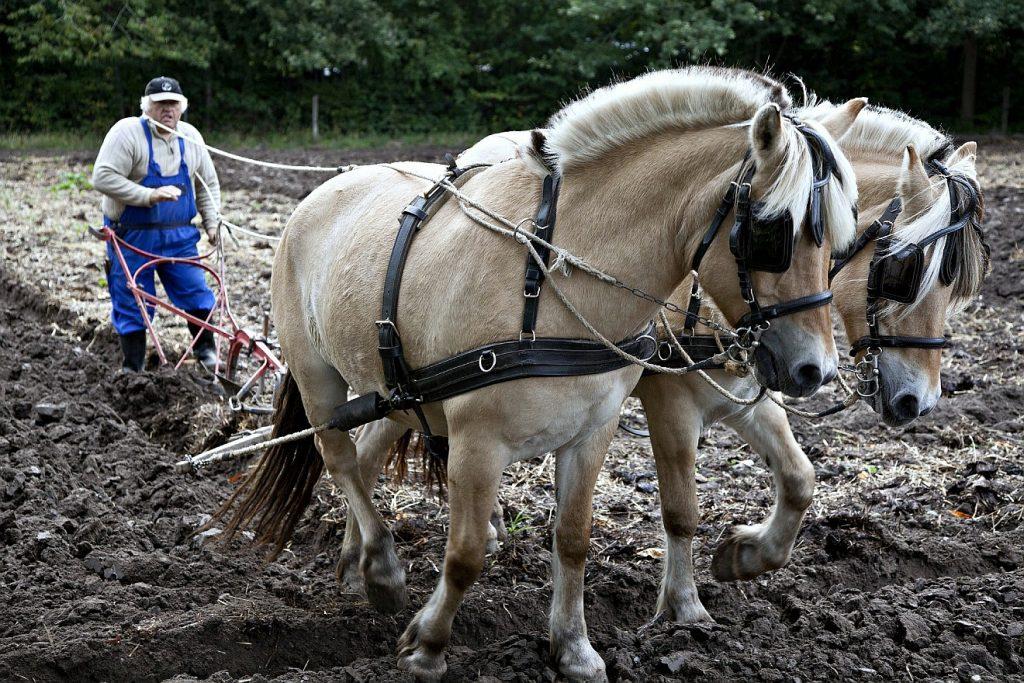 Ein Landwirt pflügt den Acker mit einem Pferdegespann