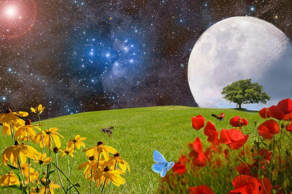 Sehnsucht nach der grünen Wiese: Eine Wiese mit gelben und roten Blumen vor einem Himmel mit riesigem Mond und leuchtenden Sternen