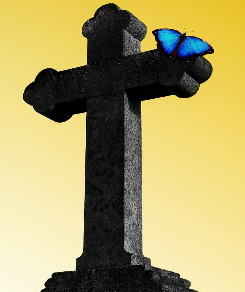 Gott ist ein Gott der Lebenden: Auf einem Steinkreuz vor hellgelbem Hintergrund sitzt ein blauer Schmetterling