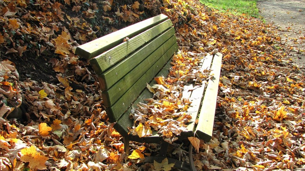 Zeit zum Loslassen: Eine Parkbank, auf der Herbstlaub liegt, umgeben von noch mehr Herbstlaub