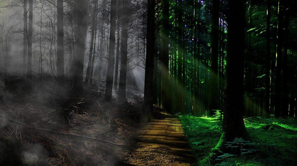 Vom Tode zum Leben hindurchdringen: Links von Nebel umwaberter Wald, rechts dringen Sonnenstrahlen auf sattes Grün zwischen den Bäumen